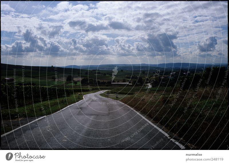 wohin der weg führt Natur Pflanze Ferien & Urlaub & Reisen Wolken Tier Ferne Straße Freiheit Landschaft Stimmung Kunst Freizeit & Hobby Horizont Tourismus