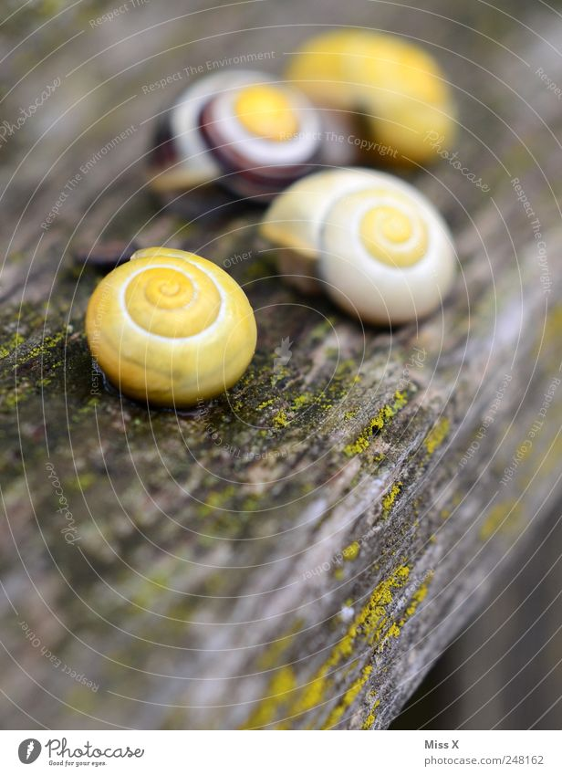 Diegos Schneckenfamilie Tier 4 Tiergruppe schleimig gelb langsam Schneckenhaus Holz Garten Baumstamm Farbfoto mehrfarbig Außenaufnahme Nahaufnahme Muster