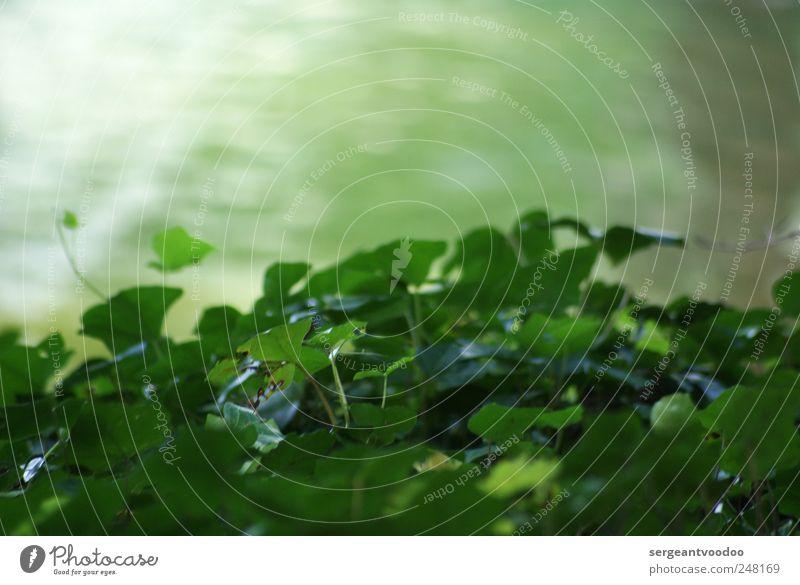 Near the river.... Natur Wasser grün Pflanze Sommer ruhig Blatt Farbe Umwelt Frühling Wege & Pfade träumen Küste Stimmung See Zufriedenheit