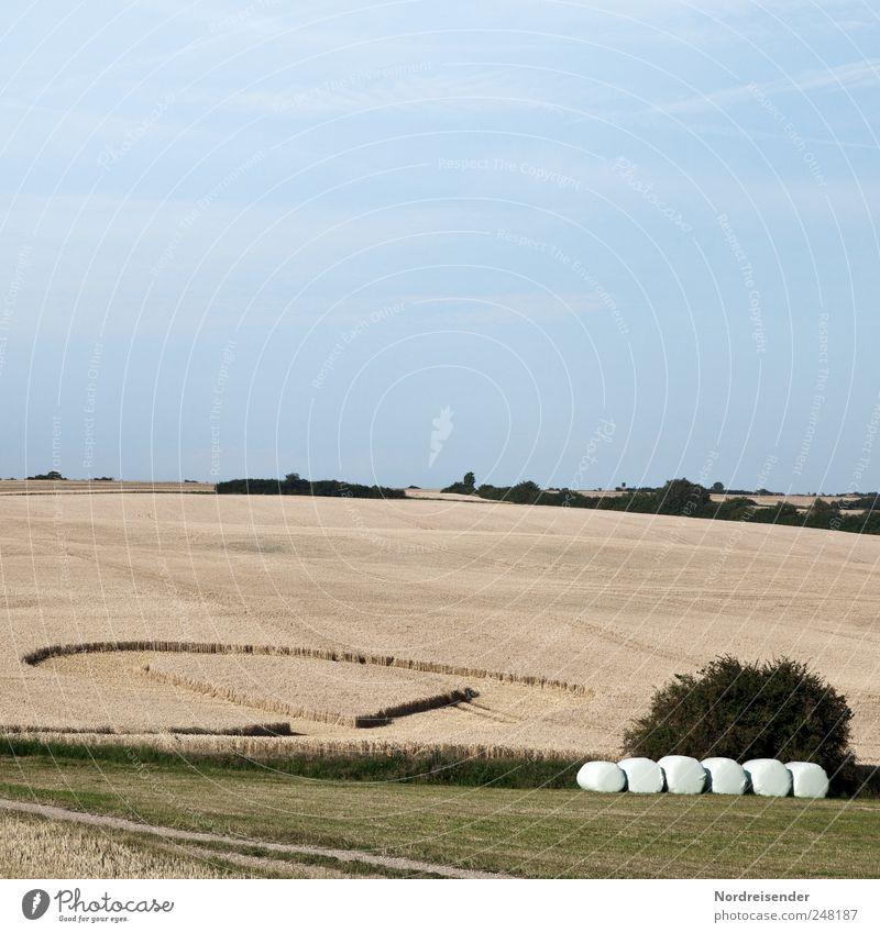 Landliebe Natur Pflanze Sommer Landschaft Wege & Pfade lustig Lebensmittel Arbeit & Erwerbstätigkeit Feld Ernährung Herz einzigartig Schönes Wetter Romantik