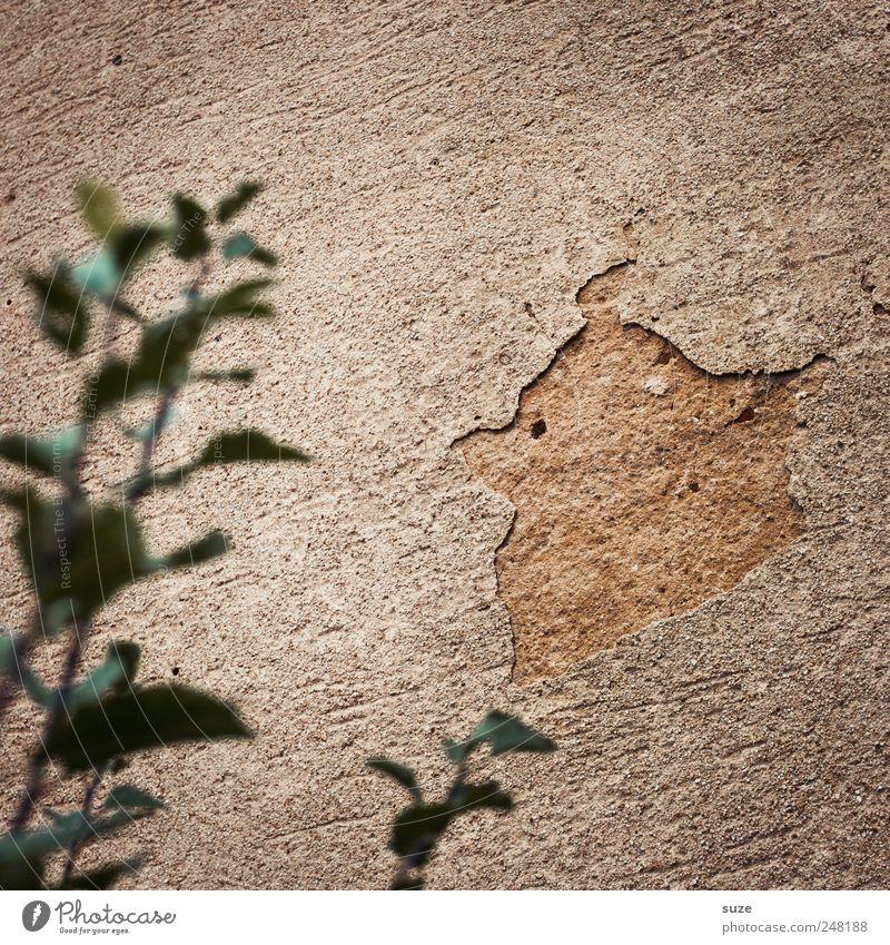 Angry bird alt grün Pflanze Blatt Wand braun Vogel lustig dreckig kaputt Sträucher Putz Demontage Phantasie