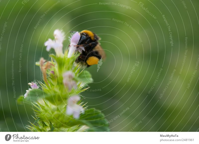 Erdbiene Natur Pflanze Tier Frühling Sommer Herbst Klima Schönes Wetter Wind Blume Gras Blatt Blüte Garten Park Feld Wald Wildtier Biene Käfer 1 berühren