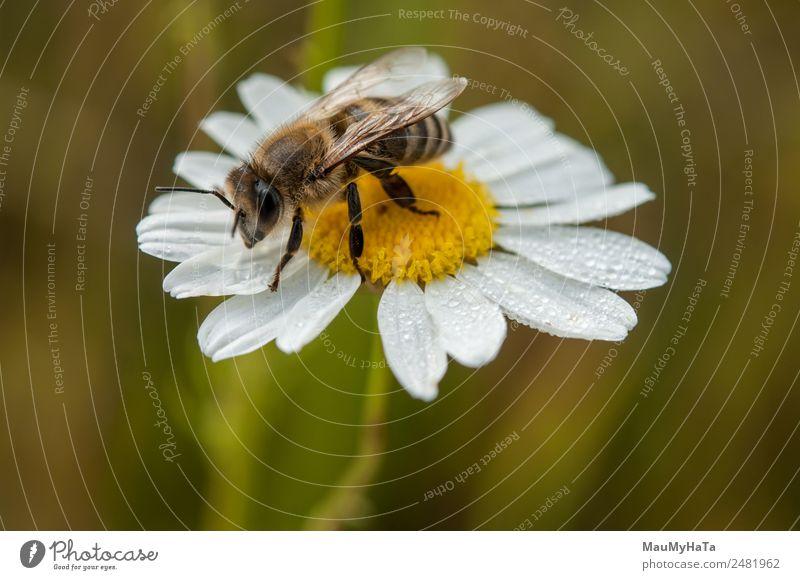 Biene Natur Pflanze Tier Wasser Wassertropfen Sommer Klima Schönes Wetter schlechtes Wetter Blume Gras Blatt Blüte Garten Park Feld Wald Wildtier 1 Gefühle
