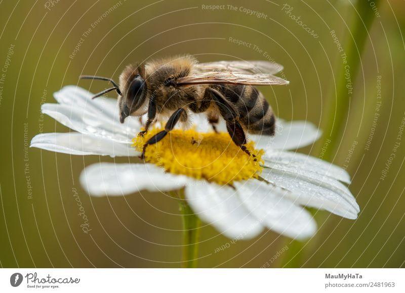 Biene Natur Pflanze Tier Wasser Wassertropfen Wolkenloser Himmel Sommer Klima Klimawandel Schönes Wetter schlechtes Wetter Blume Gras Blatt Blüte Wildpflanze
