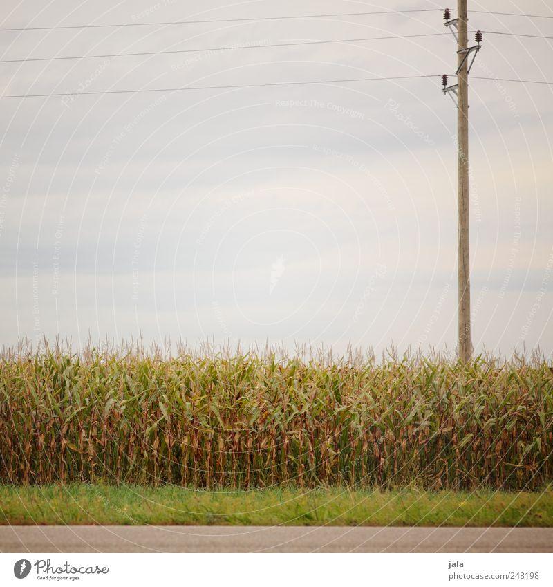 maisfeld Umwelt Natur Landschaft Pflanze Himmel Gras Grünpflanze Nutzpflanze Mais Maisfeld Strommast Hochspannungsleitung Straße natürlich blau grau grün