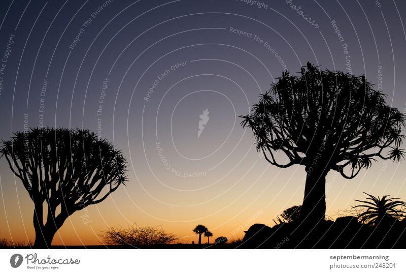 Schattenwelt Himmel Natur Baum blau schwarz gelb