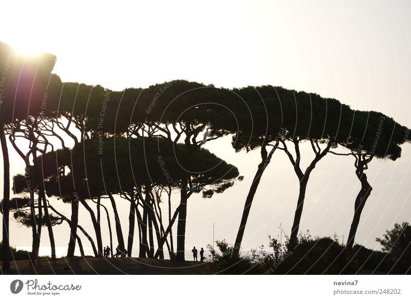 zwergenland Mensch Natur Ferien & Urlaub & Reisen weiß Baum Sonne ruhig schwarz Erwachsene Erholung Wald Ferne Umwelt Menschengruppe Park wandern