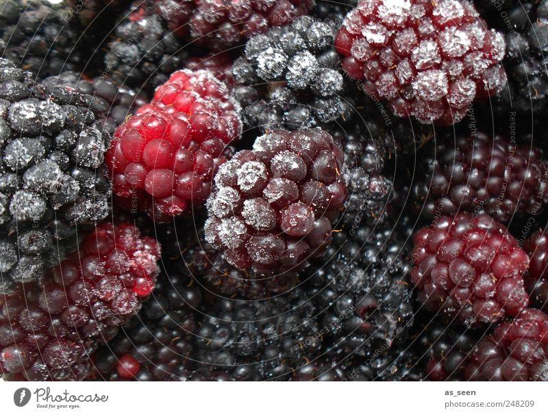 Brombeeren eisblaurotviolett Lebensmittel Frucht Ernährung Eis Frost genießen ästhetisch Gesunde Ernährung kalt braun rosa weiß Farbfoto Innenaufnahme