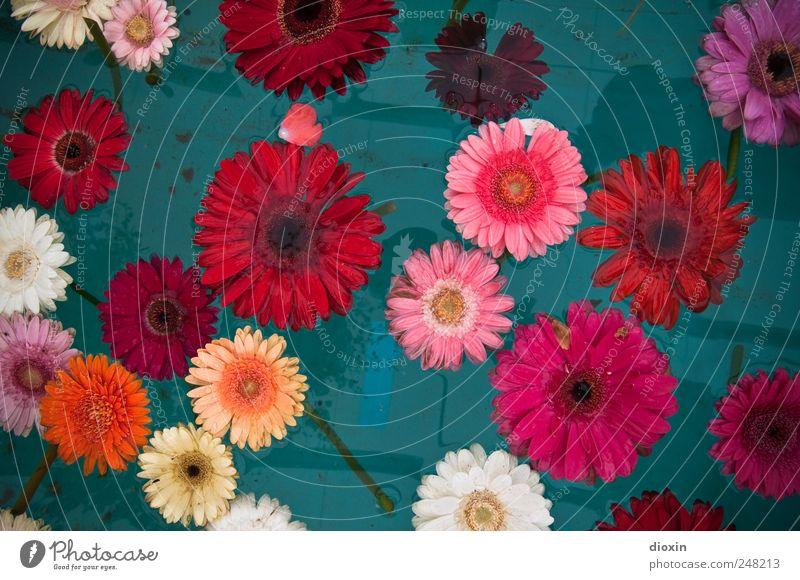 Floating Flowers Pt.3 Natur Wasser Pflanze Blume ruhig Erholung Blüte Zufriedenheit Schwimmen & Baden natürlich nass Blühend Flüssigkeit Lebensfreude Duft