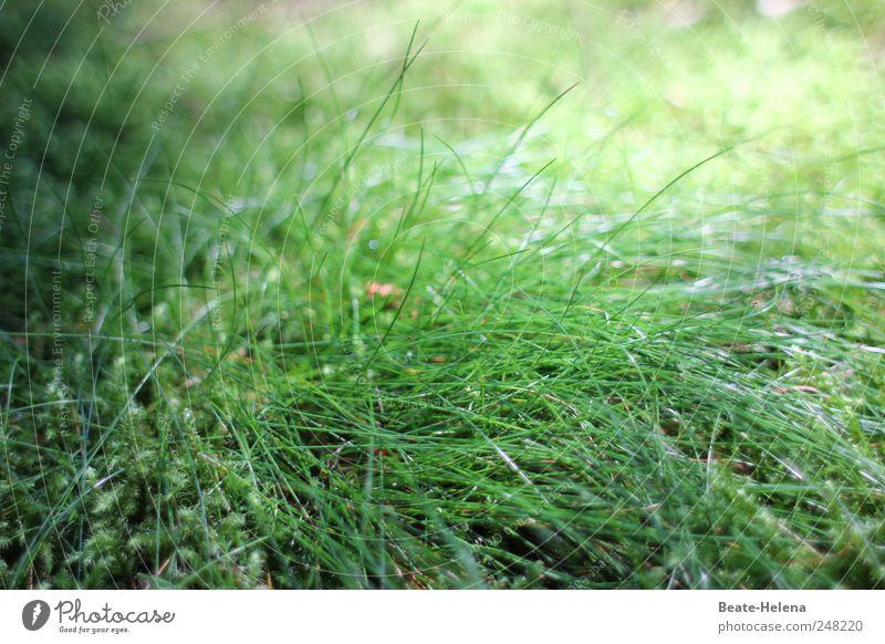 Lichtgrün Natur Landschaft Pflanze Sommer Schönes Wetter Gras Fressen Wachstum ästhetisch Sportrasen Rasen Lichteinfall Sonnenbrille Sonnenblume Grasbüschel
