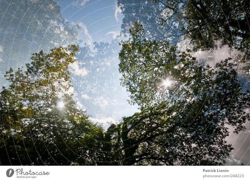 Waldfrieden Umwelt Natur Landschaft Pflanze Urelemente Himmel Sonne Sonnenlicht Wetter Baum Park Freundlichkeit hoch schön oben Beginn Kitsch Klima Kraft
