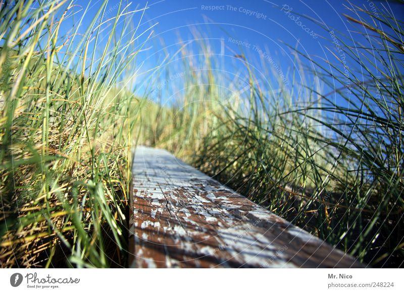 nordic nature Natur grün Pflanze Umwelt Holz Gras Küste Wind natürlich Sträucher Düne Schilfrohr Verfall Schönes Wetter Holzbrett Lack