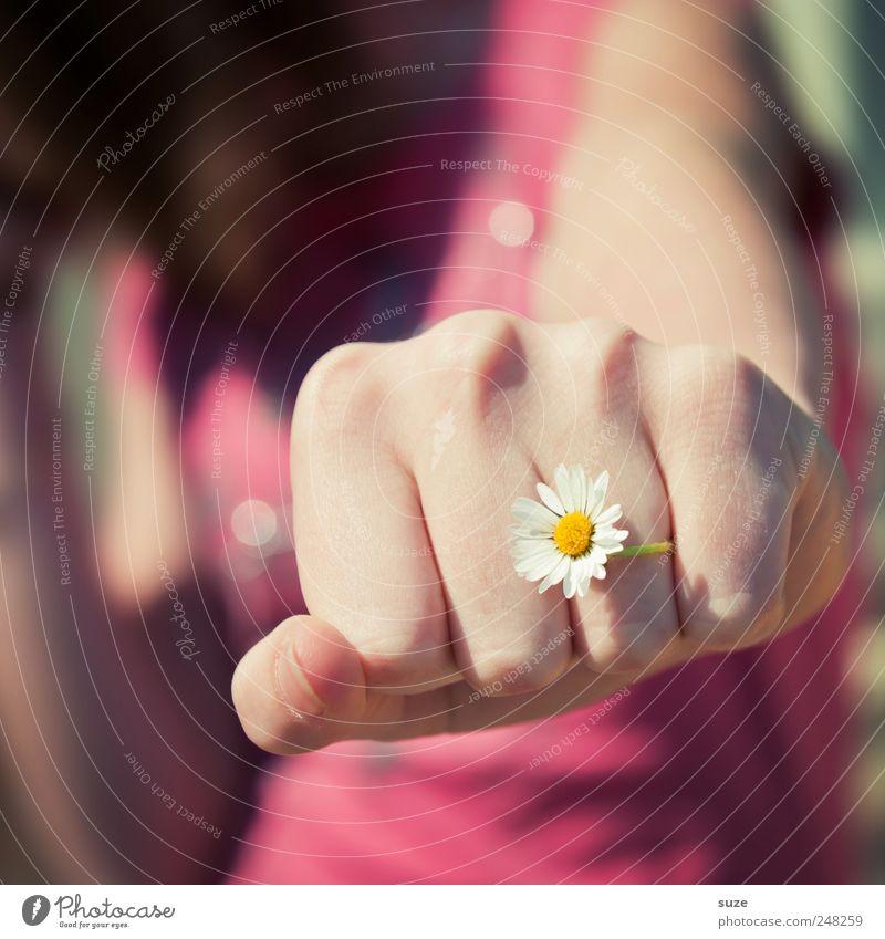 Frauenboxen Mensch Natur Jugendliche Hand Blume Erwachsene feminin rosa Arme Haut Finger Junge Frau zart Gewalt Gänseblümchen