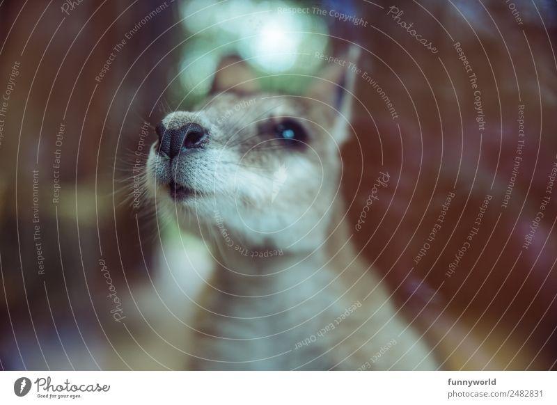 Kleines Känguru Tier Wildtier Känguruh 1 Duft frech lustig nah niedlich Fell Geruch weich Nase Schnurrhaar Zoo Australien Beuteltiere Neugier
