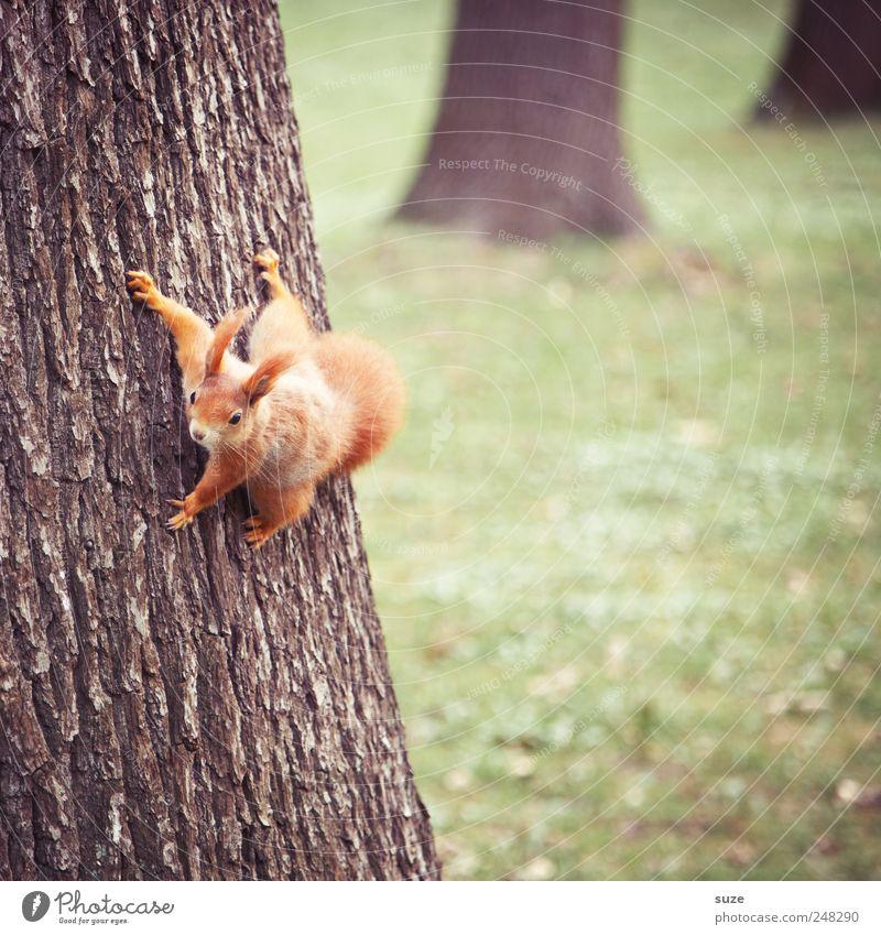Stammhalter grün rot Tier Wiese lustig klein braun Park Wildtier niedlich Neugier Fell Tiergesicht Baumstamm hängen tierisch
