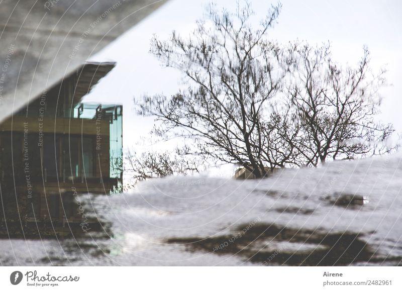 Alltagstristesse Wasser Winter schlechtes Wetter Baum Gebäude Bürogebäude Fassade Beton dunkel nass Stadt grau Unlust Verzweiflung Gedeckte Farben Außenaufnahme