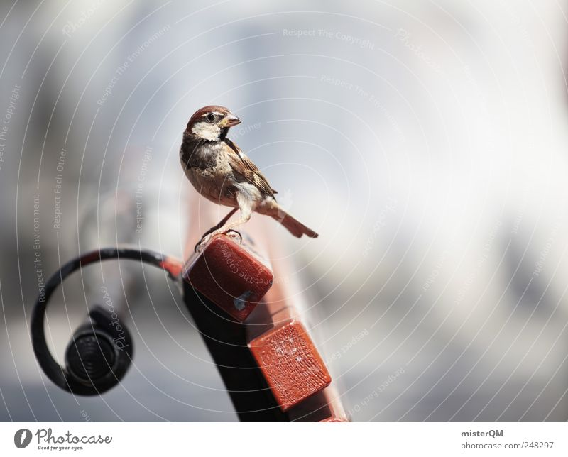 Pete Pieps. schön ruhig Tier Umwelt klein Park Vogel Pause Bank niedlich füttern Spatz Abenteurer Sonnenbank Rastplatz Sperlingsvögel