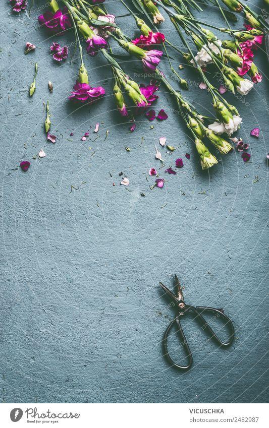 Sommer Blumen auf Hintergrund mit Schere Stil Design Garten Tisch Natur Pflanze Blumenstrauß rosa Hintergrundbild arrangiert Gewürznelke Farbfoto Studioaufnahme