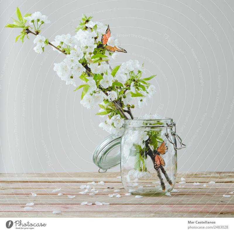 Kirschblütenzweig mit Schmetterlingsornamenten im Glasbehälter Design schön harmonisch Innenarchitektur Dekoration & Verzierung Tisch Natur Pflanze Baum Blume