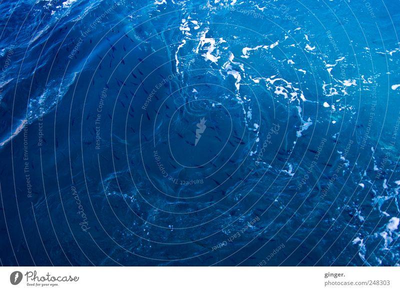 Wasser! Meer! Fische! Umwelt Schwimmen & Baden Schaum Schaumblase Wasserwirbel Gischt viele Wellen Wellengang unruhig aufgewirbelt Verwirbelung drehen Bewegung