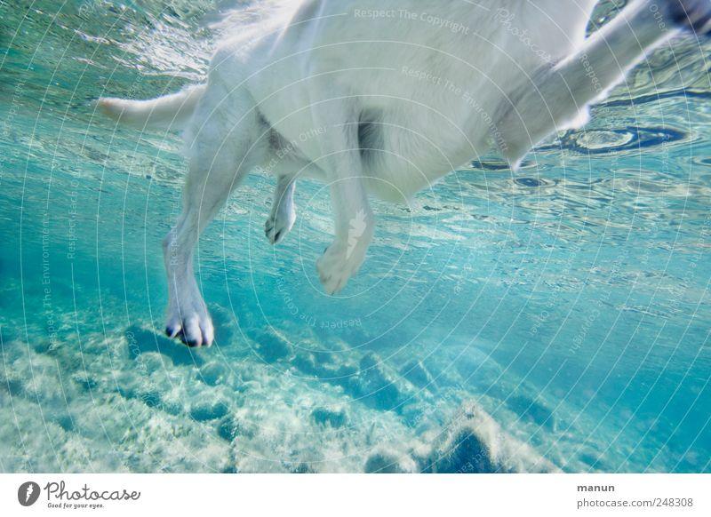 Seehund Hund Natur Wasser Sommer Meer Freude Tier hell Schwimmen & Baden nass natürlich außergewöhnlich verrückt authentisch Perspektive Fluss