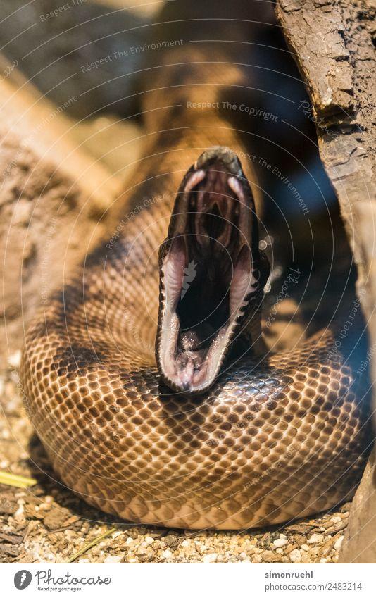 Schlange beim Zahnarzt Wildtier Zoo Aggression wild Macht klug Angst Entsetzen Todesangst gefährlich falsch Ärger trotzig Hass Religion & Glaube Teufel böse