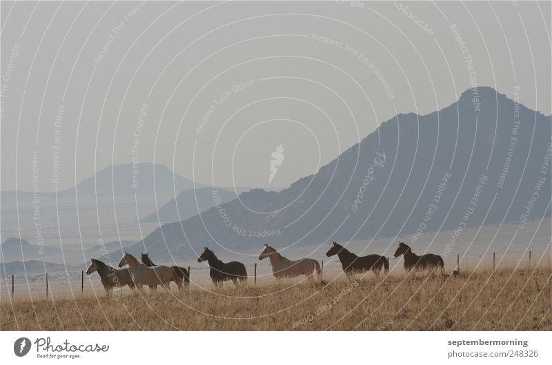 Pferde Tier Berge u. Gebirge Pferd stehen Tiergruppe hören