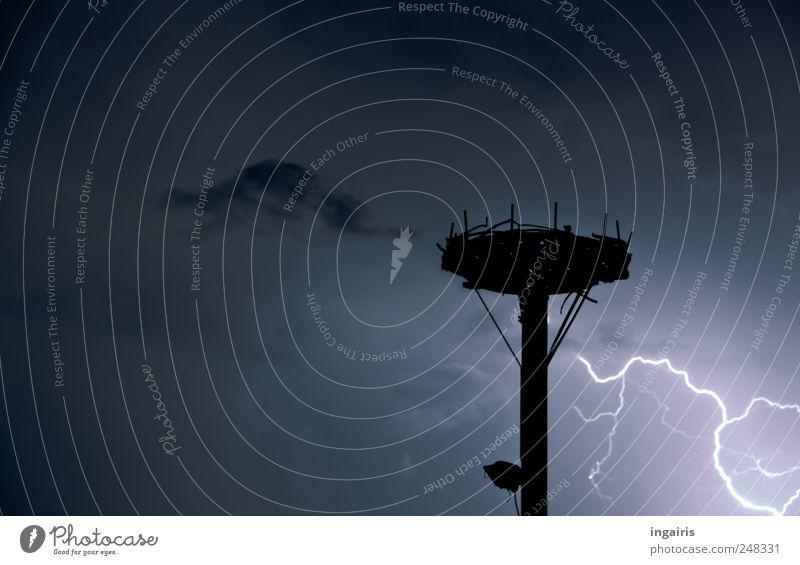 Knapp vorbei Natur Luft Gewitterwolken Nachthimmel Klima Wetter Unwetter Blitze bedrohlich dunkel demütig Angst Energie Horizont Horst Donnern Vogelnest