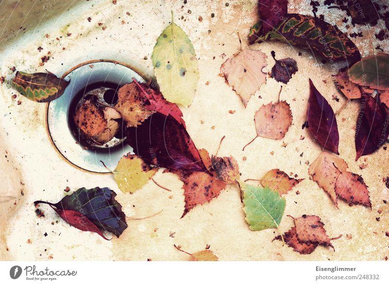 Herbst Natur alt weiß grün rot Pflanze gelb dreckig trist Vergänglichkeit Ekel hässlich Abfluss Herbstlaub Waschbecken