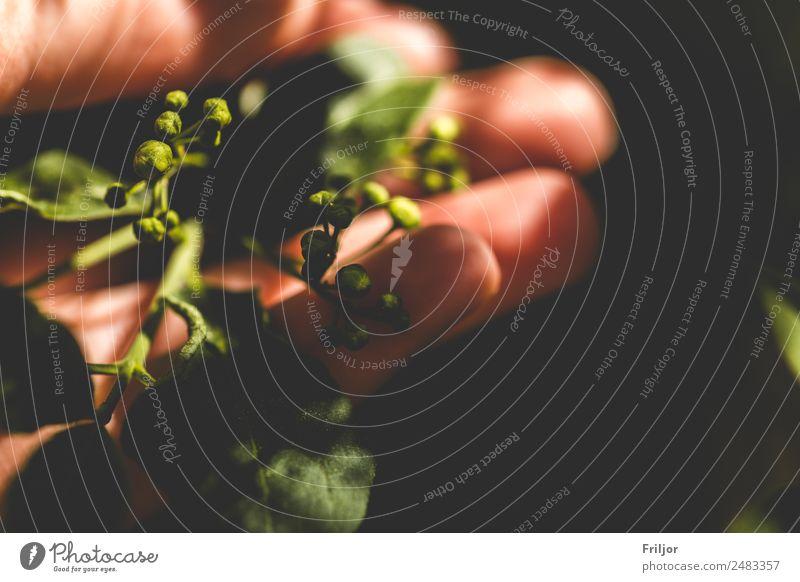 Grün.Spüren Natur Sommer Pflanze grün Hand Blatt schwarz Frühling Blüte Idylle Sträucher Schönes Wetter berühren Grünpflanze Wildpflanze Wörlitzer Park