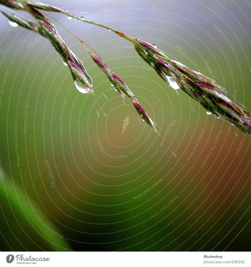 natural mirror Umwelt Natur Landschaft Pflanze Wassertropfen Sommer Nebel Gras Blüte Feld nass natürlich Sauberkeit Spitze blau braun mehrfarbig grau grün