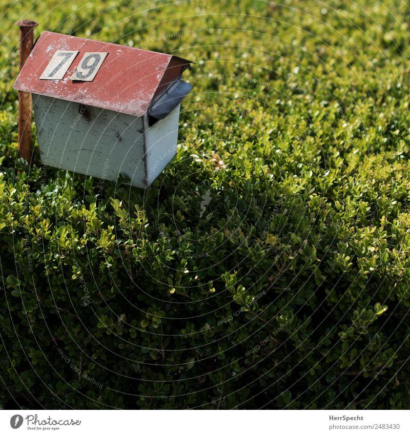 Letter box Häusliches Leben Wohnung Pflanze Sträucher Grünpflanze Garten Einfamilienhaus Briefkasten Ziffern & Zahlen alt authentisch einfach trashig trist grün