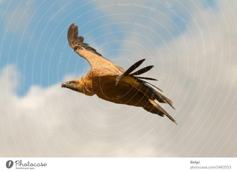 Himmel Natur weiß Tier Wolken schwarz Gesicht natürlich Vogel fliegen wild Aussicht Europa Feder groß Spanien