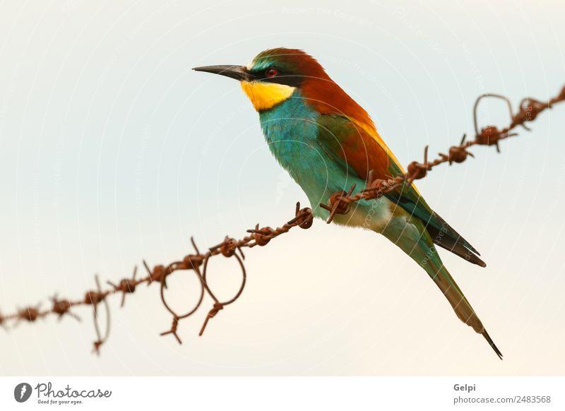 ortrait eines bunten Vogels exotisch schön Freiheit Umwelt Natur Tier Himmel Park Biene Liebe klein wild blau gelb grün rot Farbe Zusammenhalt Tierwelt