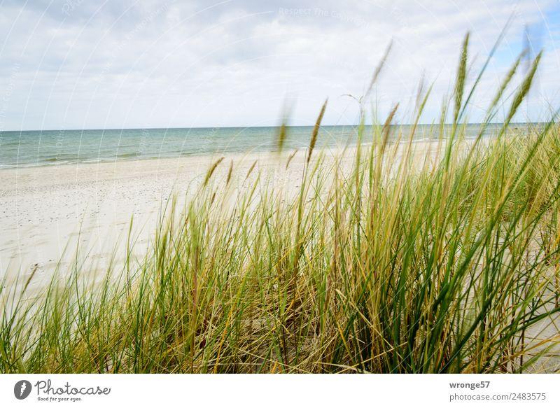 Düne mit Meerblick Freiheit Sommer Sommerurlaub Strand Natur Landschaft Pflanze Sand Luft Wasser Himmel Wolken Gras Dünengras Küste Ostsee Stranddüne maritim