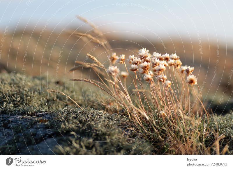 Sommerabend auf Hallands Väderö 3 Himmel Natur Pflanze Landschaft Erholung ruhig Blüte natürlich Küste Gras Felsen Wachstum Schönes Wetter Blühend Klima