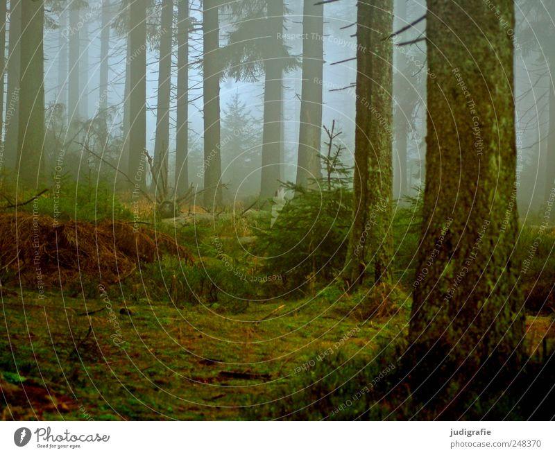 Dämmerung senkte sich von oben Natur Baum Pflanze ruhig Wald kalt dunkel Herbst Landschaft Umwelt Stimmung Wetter Nebel Klima natürlich wild