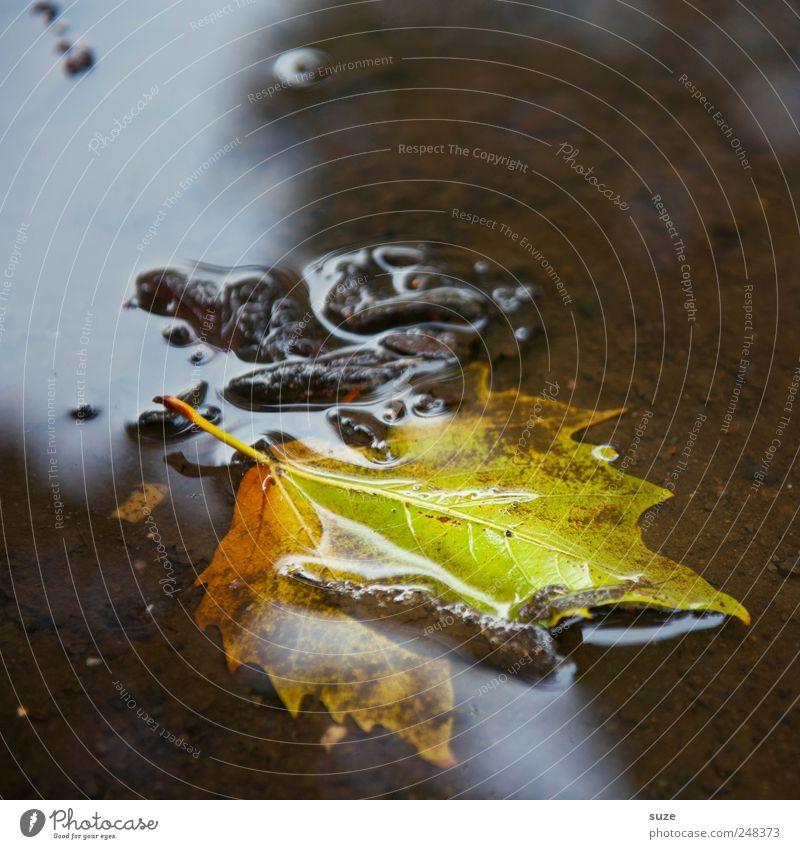 Blatt Umwelt Natur Landschaft Wasser Herbst authentisch nass natürlich schön Gefühle Stimmung Jahreszeiten Färbung Pfütze Herbstbeginn Novemberstimmung Oktober