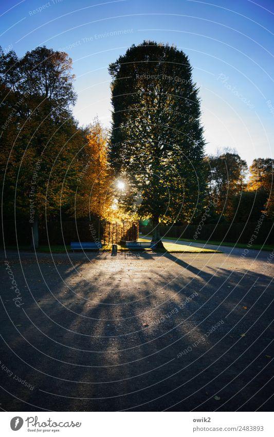 Hannoveraner Umwelt Natur Landschaft Pflanze Wolkenloser Himmel Sonne Herbst Schönes Wetter Baum Park Wiese Herrenhäuser Gärten Sehenswürdigkeit Wege & Pfade