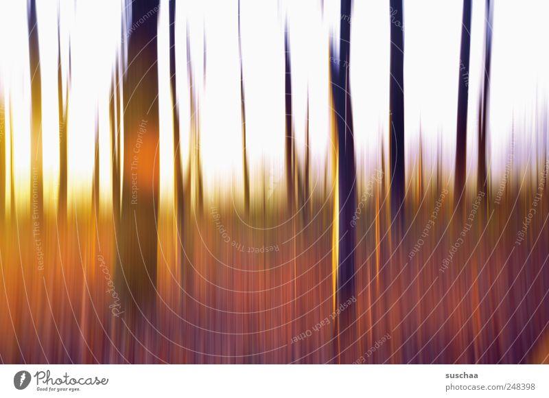 im wald ... Umwelt Natur Himmel Sonnenaufgang Sonnenuntergang Sonnenlicht Herbst Klima Schönes Wetter Wald Holz außergewöhnlich Kitsch mehrfarbig Kunst Baum