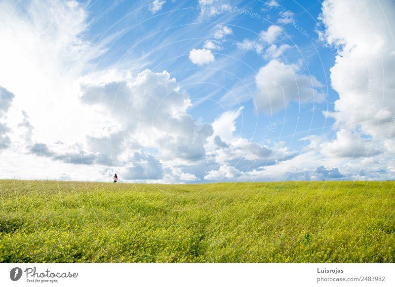 Mädchen, das eines Tages auf einem Feld mit gelben Blumen spazieren geht. Lifestyle Freude Ferien & Urlaub & Reisen Freiheit Mensch feminin Kind 1 3-8 Jahre