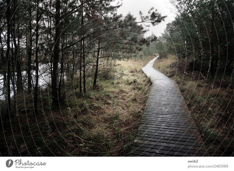 Lehrgang Umwelt Natur Landschaft Pflanze Himmel Wolken Horizont Herbst schlechtes Wetter Baum Gras Sträucher Moor Wege & Pfade Naturlehrpfad Steg Holz