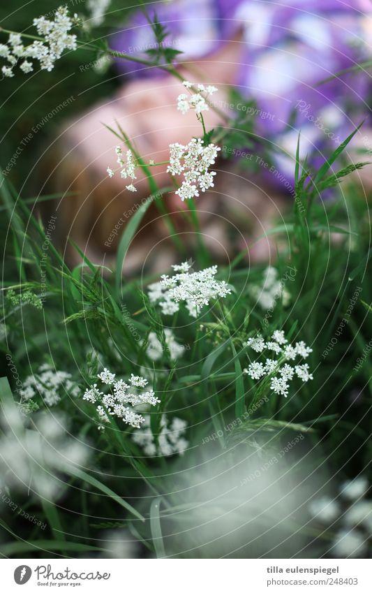 . Frau Mensch Natur weiß grün Pflanze Sommer Blume Erholung Wiese träumen blond liegen natürlich nah violett
