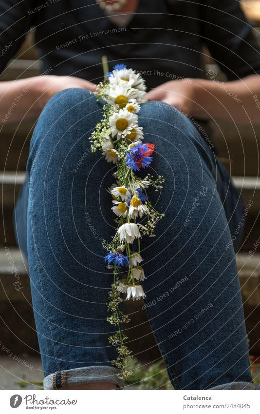 Blumenkranz flechten   UT Dresden Pflanze Sommer Blüte Wildpflanze Kornblume Margareten Treppe Jeanshose Blühend Duft sitzen elegant positiv blau schwarz weiß