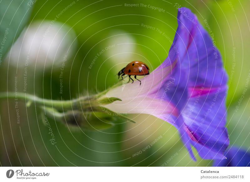 Wieder zurück Natur Sommer Pflanze schön grün Blume Tier Blatt Umwelt orange rosa Stimmung Fröhlichkeit Blühend violett Insekt