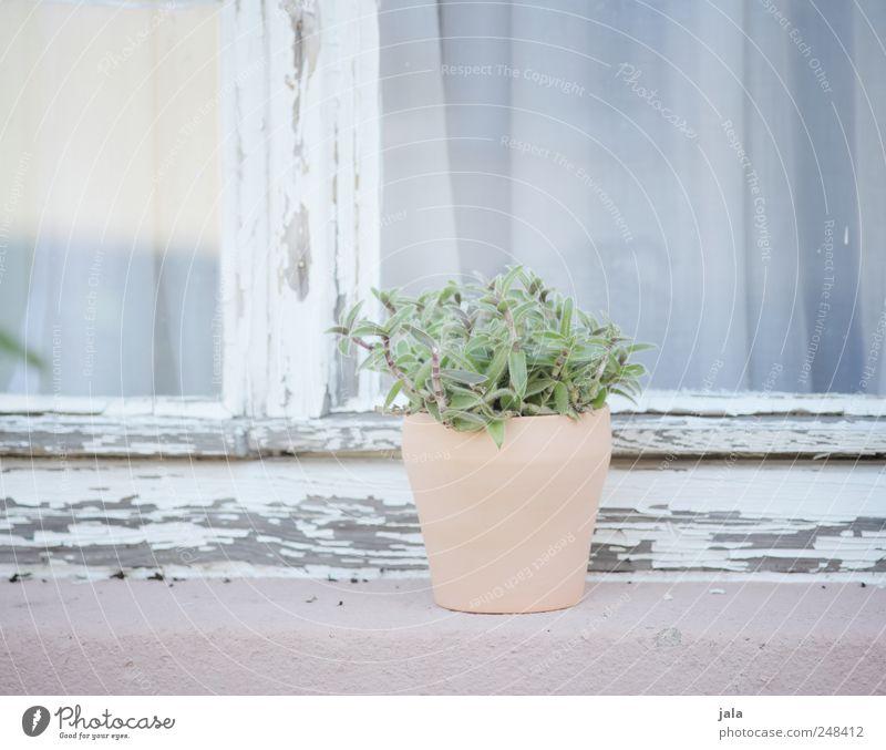 fensterbank Pflanze Topfpflanze Gebäude Fassade Fenster ästhetisch elegant rosa weiß Pastellton hell-blau Farbfoto Außenaufnahme Menschenleer Tag