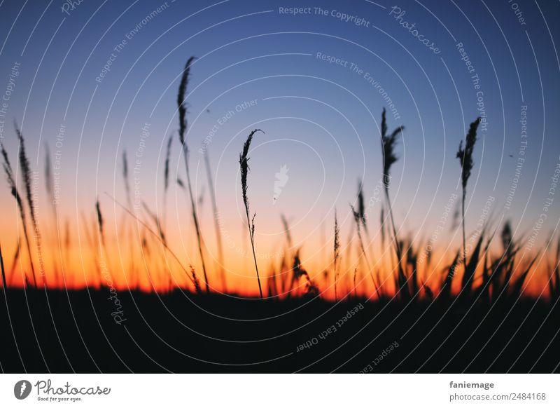 Sommerabend in der Camargue Umwelt Natur Landschaft Himmel Horizont Sonnenaufgang Sonnenuntergang Sonnenlicht Schönes Wetter Feld genießen Stimmung Schilfrohr
