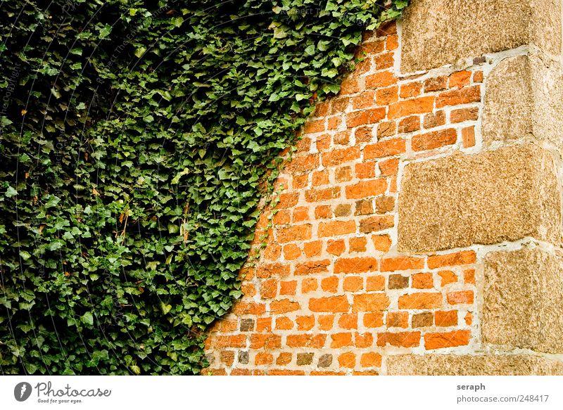 Mauer Stone Brick gemauert Haus Wand Efeu Pflanze Kletterpflanzen verwuchert Overgrown Extra Fuge Sandstein abstrakt diagonal Background picture Blatt Gegenteil