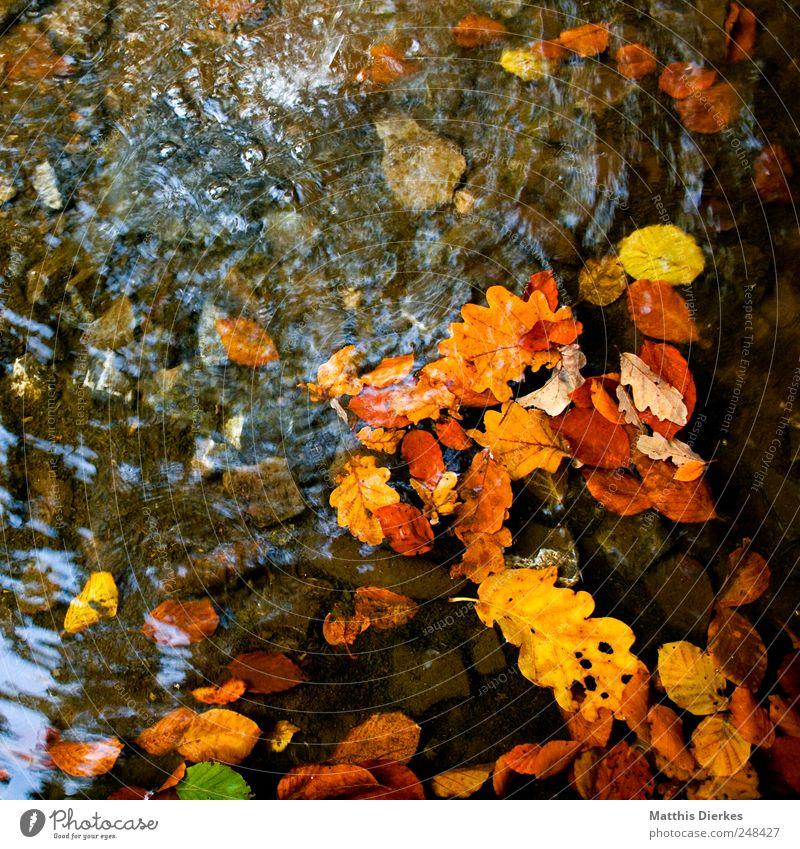 Herbst Natur ästhetisch Herbstlaub Blatt Vergänglichkeit herbstlich Wassertropfen Fluss Bach Bachufer Quelle Flußbett Eiche Eichenblatt Klarheit deutlich frisch