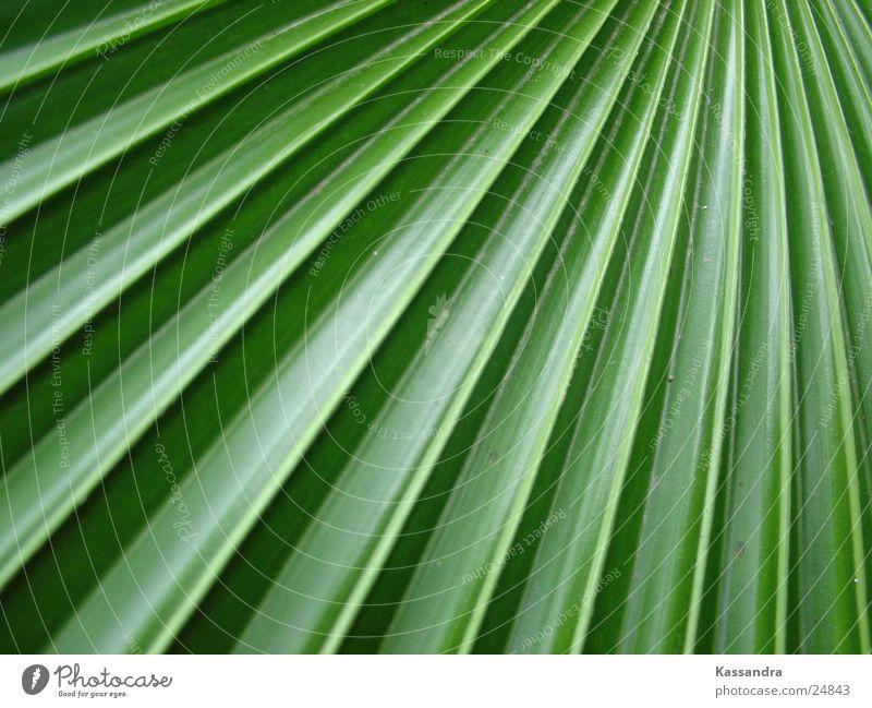 leaf Natur grün Pflanze Blatt Echte Farne